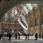 londonmuseum-blue-whale